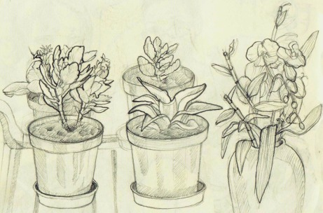 Observation_Study_plants