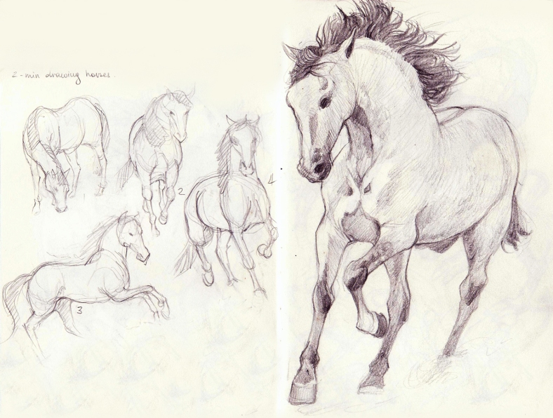 horse_studies